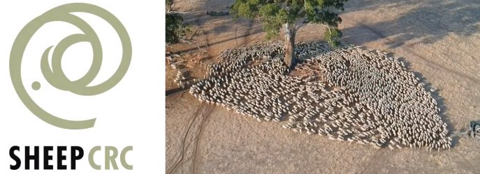 SheepCRC slide